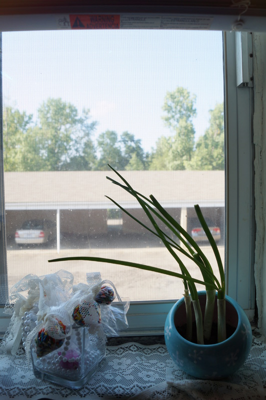 Grow your own Green Onions in Two Weeks!